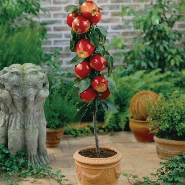 """Ovocné stromy - Jabloň stĺpová """"Waltz"""" jesenná"""