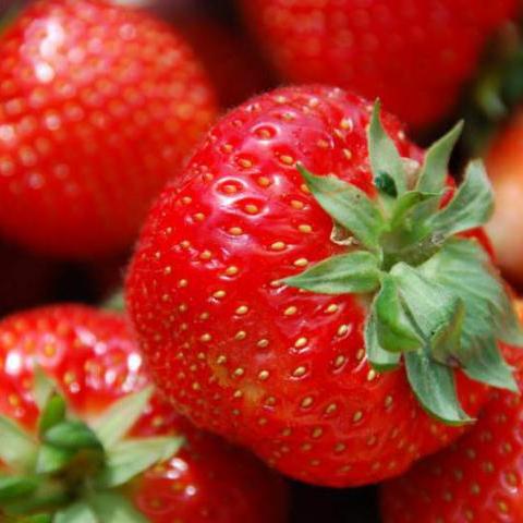 """Drobné ovocie - Jahoda """"Honeoye"""" skorá odroda"""