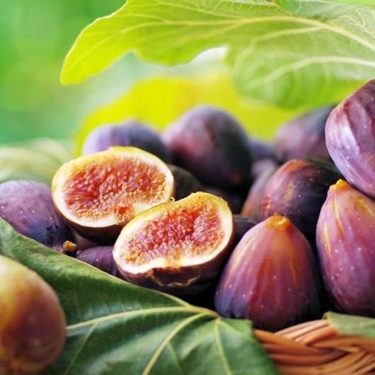 Drobné ovocie - Figovník mrazuodolný Peretta