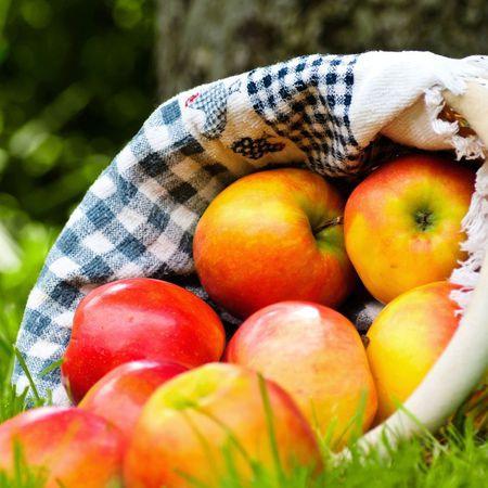 """Ovocné stromy - Jabloň """"Ontário"""" zimná"""
