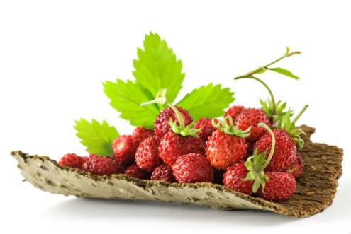 Drobné ovocie - Jahoda lesná