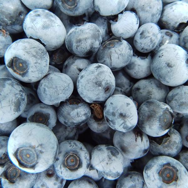 Drobné ovocie - Čučoriedka kanadská ´Nelson´